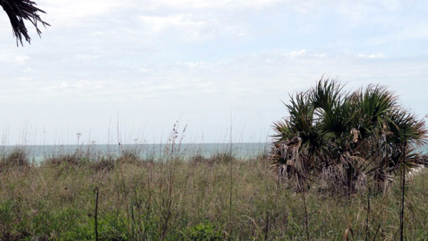 Sea Oats and Palmetto at the beach near Boca Grande