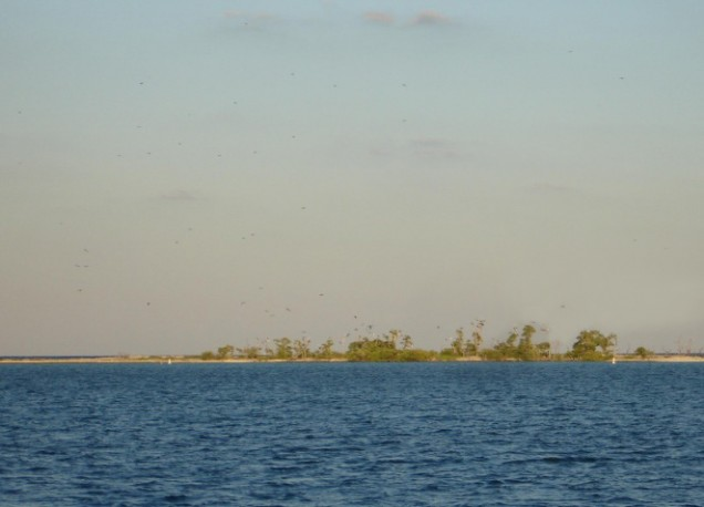 Bush Key (A Bird Sanctuary)